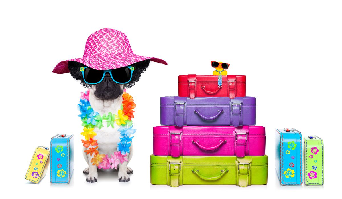pet-luggage-main